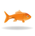 goldfish isolated vector image vector image