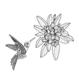 Hummingbird and Bouquet with Plumeria or Frangipan vector image