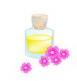Pink Yarrow or Achillea Millefolium with Essential vector image vector image