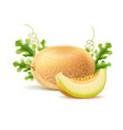 realistic round fresh melon with slice vector image vector image