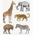 set african animals elephant giraffe leopard vector image vector image