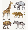 set of african animals elephant giraffe leopard vector image vector image