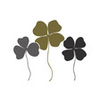 clovers with four and three leaves bouquet vector image vector image