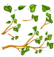green leaves on branch object vector image vector image