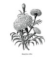 marigold flower hand draw vintage style black vector image vector image