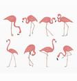 variety pink flamingo set vector image vector image