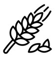 wheat plant icon outline style vector image vector image