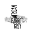 african grey parrot one of the greates species of vector image vector image