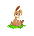 brown bunny or rabbit easter holiday vector image