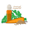 carrot seed essential oil vector image vector image