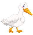 Duck with white feather vector image vector image