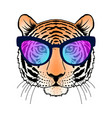 tiger with sunglasses vector image