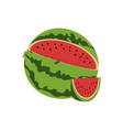 watermelon design vector image vector image