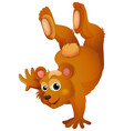 brown bear handstanding on white background vector image vector image