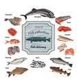 hand drawn colored seafood collection vector image
