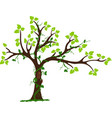 Tree with liana and vine vector image