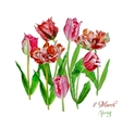 Background with tulips4-03 vector image vector image
