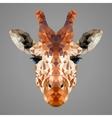 Giraffe low poly portrait vector image