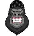 Monkey biker vector image vector image
