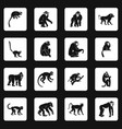 monkey types icons set squares vector image