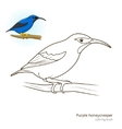 Purple honeycreeper color book vector image vector image