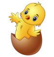 cartoon little baby chicken in the broken egg shel vector image vector image