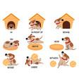 english prepositions with cute animal cartoon dog vector image vector image