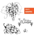 grapes set of vector image