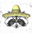 hipster animal raccoon wearing a sombrero hat vector image