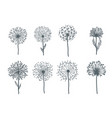 tender wild dandelion in all phases of blooming vector image vector image