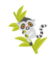cute smiling lemur on bamboo three exotic animal vector image