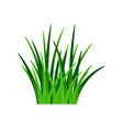 dark green grass isolated on white vector image