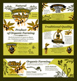 olive oil and fruit banner of organic product vector image vector image