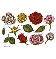 set hand drawn colored roses vector image vector image