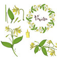 wreath and seamless brush from vanilla orchid vector image vector image