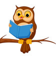owl cartoon reading a book vector image vector image