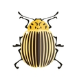 Potato bug vector image