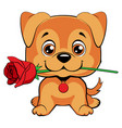 cute puppy with a flower cartoon hand drawn vector image