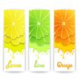 Citrus juice design vector image