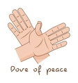 Hands making fly of bird Dove of peace sign vector image