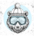hipster animal bear in winter hat