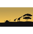 Silhouette of giraffe and tree vector image