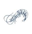 small aquatic creature shrimp monochrome depiction vector image