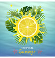 tropical background with juicy lemon vector image vector image