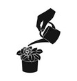 watering the houseplant in a pot home flower vector image vector image