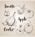 handdrawn vegetables set vector image