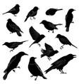 set different wild birds silhouette vector image