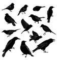 set of different wild birds silhouette vector image vector image