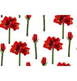 tropical red lily flowers branch white background vector image vector image