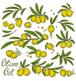 vintage olive branches set vector image vector image
